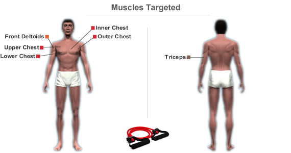 Muscles Targeted By Workout Routine For A Large Chest