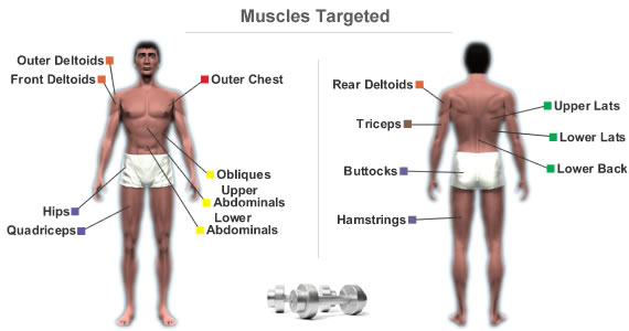 Muscles Targeted By Workout Routine For Core