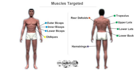 Muscles Targeted By Workout Routine For A Strong Back