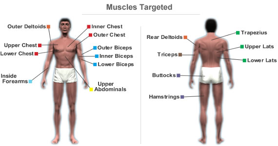 Muscles Targeted By Workout Routine For Beginners